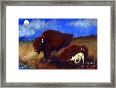 White Buffalo Calf Framed Print