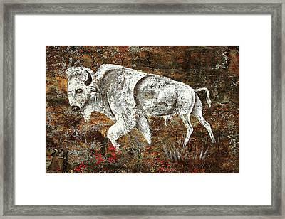 White Buffalo Framed Print
