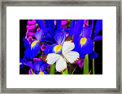 White Butterfly On Blue Iris Framed Print by Garry Gay