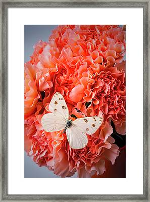 White Butterfly On Pink Carnations Framed Print