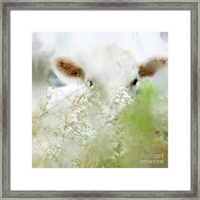 White Calf Framed Print