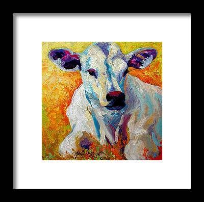 Cattle Framed Prints