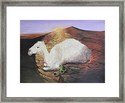 White Camel  Framed Print