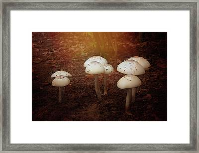 Framed Print featuring the photograph White Cap Mushrooms by Carolyn Dalessandro