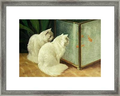White Cats Watching Goldfish Framed Print by Arthur Heyer
