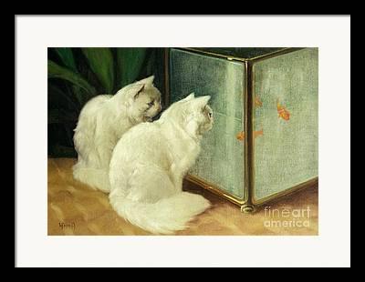 White Fur Framed Prints