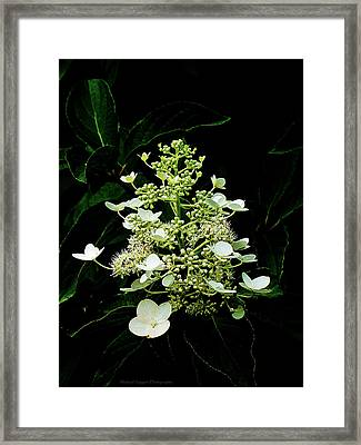 White Chandelier Framed Print by Michael Taggart II