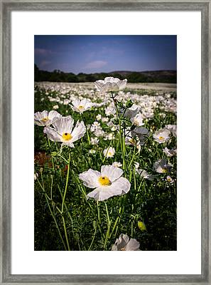 White Framed Print