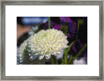 Framed Print featuring the photograph White Chrysanthemum Flower by David Zanzinger