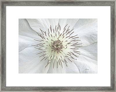 White Clematis Flower Garden 50121b Framed Print
