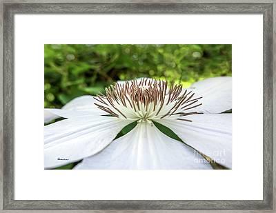 White Clematis Flower Garden 50146 Framed Print