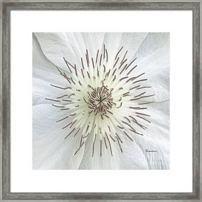 White Clematis Flower Macro 50121c Framed Print