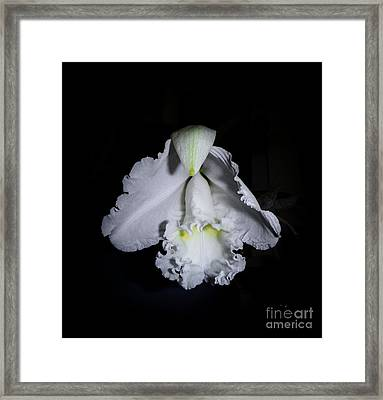 White Cloud Framed Print by Judy Hall-Folde