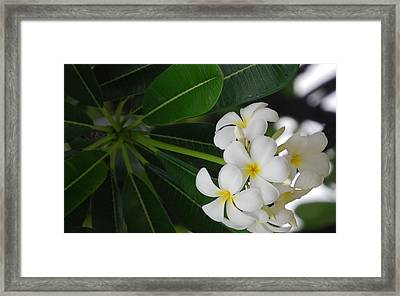 White Cluster Framed Print by Lakida Mcnair