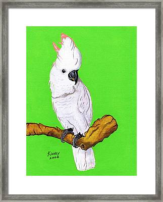 White Cockatoo Framed Print by Jay Kinney