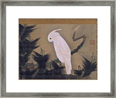 White Cockatoo On A Pine Branch Framed Print by Ito Jakuchu