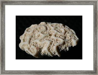 White Coral Framed Print by Mary Haber