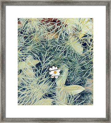 White Cosmo Framed Print