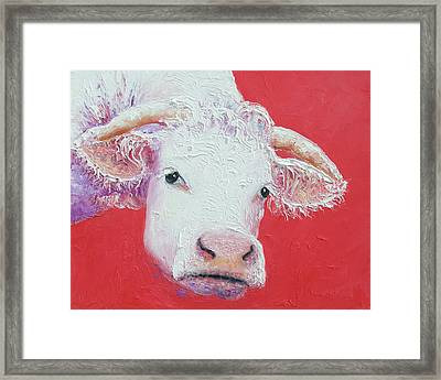White Cow With Horns Framed Print