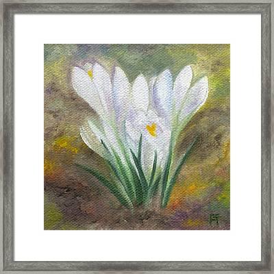 White Crocus Framed Print