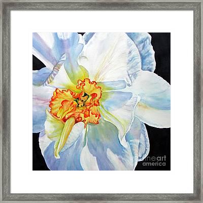 White-daffodil Framed Print by Nancy Newman