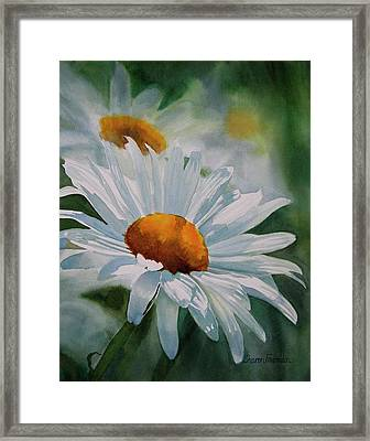White Daisies Framed Print by Sharon Freeman