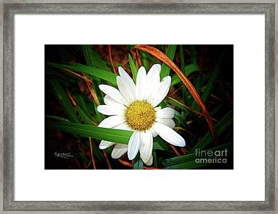 White Daisy Framed Print by Inspirational Photo Creations Audrey Woods