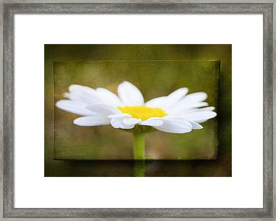 Framed Print featuring the photograph White Daisy by Eduard Moldoveanu
