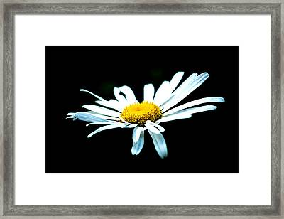 Framed Print featuring the photograph White Daisy Flower Black Background by Alexander Senin