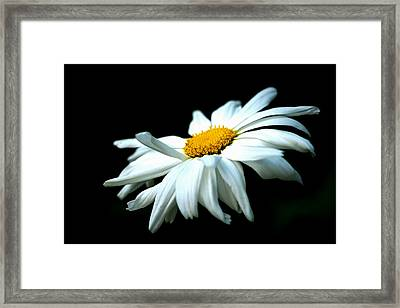 Framed Print featuring the photograph White Daisy Flower In The Wind by Alexander Senin