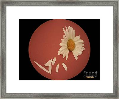 Encapsulated Daisy With Dropping Petals Framed Print