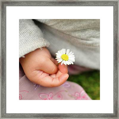 White Daisy In Baby Hand Framed Print by © Mameko