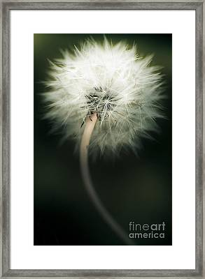 White Dandelion Framed Print by Jorgo Photography - Wall Art Gallery
