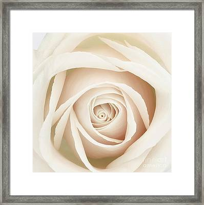 White Dawn Rose Framed Print