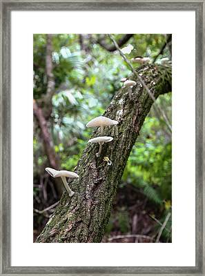 White Deer Mushrooms Framed Print