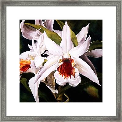White Dendrobium Orchid Framed Print