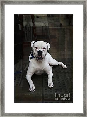 White Dog - Malaga Spain Framed Print by Mary Machare