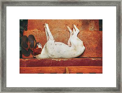 White Dog Resting On The Old Red Stairs Framed Print