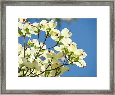 White Dogwood Flowers 1 Blue Sky Landscape Artwork Dogwood Tree Art Prints Canvas Framed Framed Print by Baslee Troutman