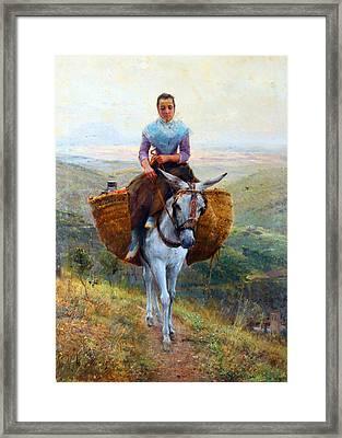 White Donnkey Framed Print by Munir Alawi