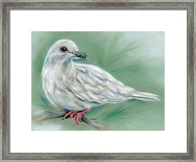 White Dove In The Pine Framed Print