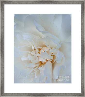 White Dream Framed Print by Valia Bradshaw