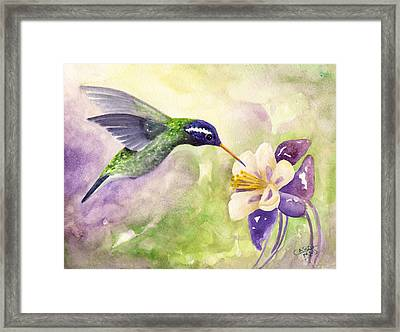 White-eared Hummingbird Framed Print by Art by Carol May