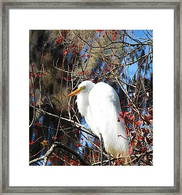 White Egret Bird Framed Print