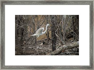 Framed Print featuring the photograph White Egret by David Bearden