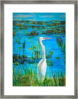 White Egret In Florida Framed Print