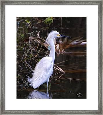 White Egret In Florida Pond Framed Print