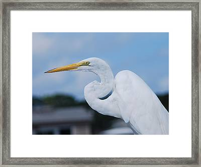 White Egret Framed Print by Margaret Palmer