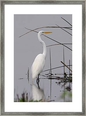 White Egret On A Gray Day Framed Print by Loree Johnson