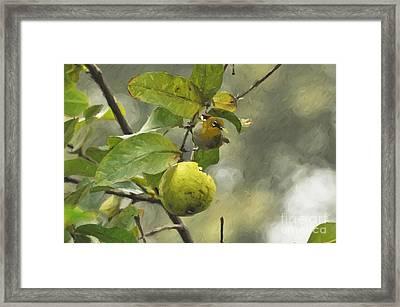 White Eye 3 Framed Print